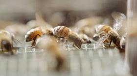 きれいな蜂飼い | Beautiful Beekeeper