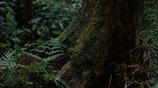 三重県木材協同組合連合会